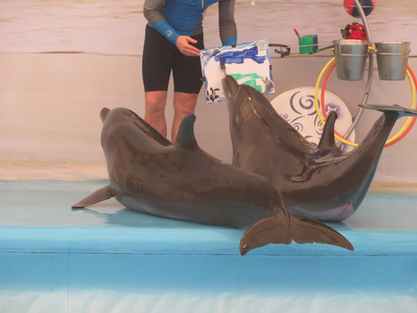 Dolphin making painting